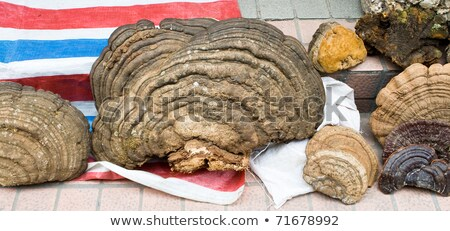 Photo stock: Arbre · champignons · alimentaire · marché · Chine