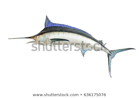Zwaard vis zee dier geïsoleerd witte Stockfoto © orensila