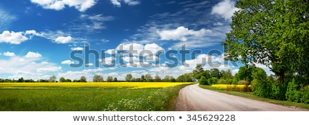 panoramic landscape of a rapeseed field stock photo © ldambies