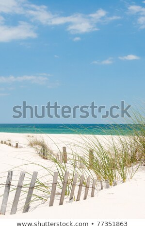 Seagrass and sand dunes Stock photo © IS2