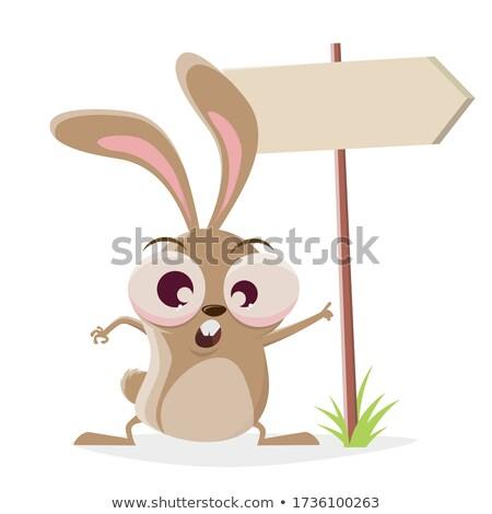 Csúnya nyuszi fut rajz illusztráció állat Stock fotó © cthoman