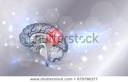 Foto d'archivio: Cervello · umano · problemi · luce · grigio · bella