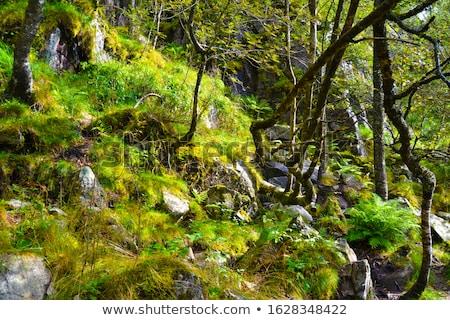 view on lysefjord fjord from the pathway preikestolen norway stock photo © kotenko