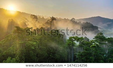 Piękna tropikalnych Rainforest scena ilustracja lasu Zdjęcia stock © colematt