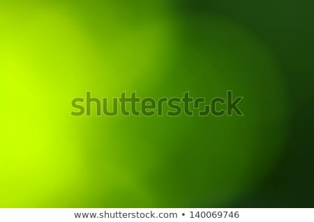 abstract green background with bubbles Stock photo © SArts