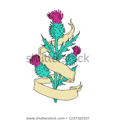 Scottish Thistle With Ribbon Color Drawing  Stock photo © patrimonio