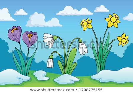 Narcissus flower theme image 1 Stock photo © clairev