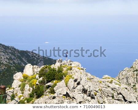 Toskana · orman · ağaç · çim · ağaçlar · yaz - stok fotoğraf © lianem