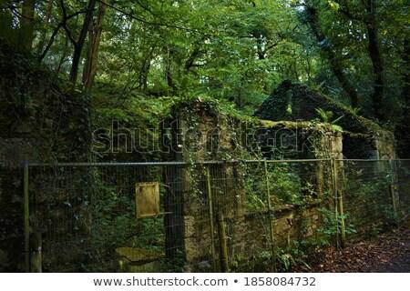 Ivy costruzione muro cielo sole home Foto d'archivio © joyr