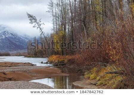 huş · ağacı · yaprakları · ağaç · yalıtılmış · beyaz · arka · plan - stok fotoğraf © lianem