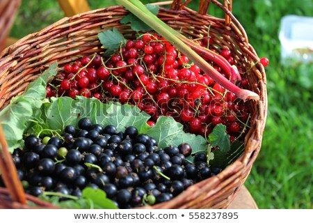 black and red currant Stock photo © M-studio