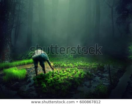 Восход · туманный · луговой · Финляндия · трава · лес - Сток-фото © yuliang11
