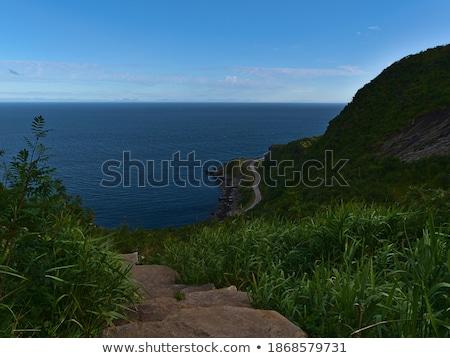 Farbenreich Vegetation Natur grünen rock Stock foto © Bertl123
