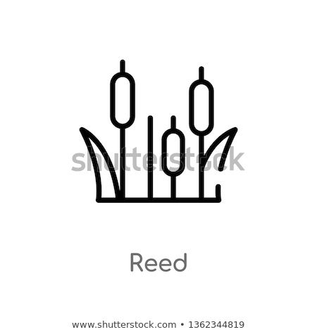 Icon reed Stock photo © zzve