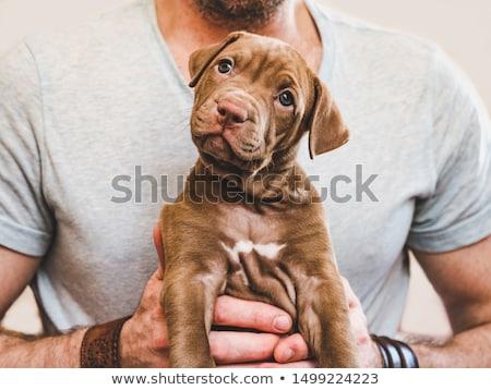 ストックフォト: ブラウン · 子犬 · 面白い · 白 · 孤立した · 動物
