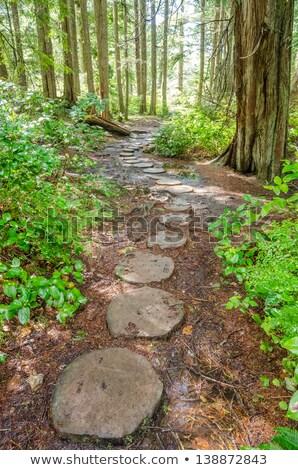 Stil natuur parcours vreedzaam zonnige houten Stockfoto © FOTOYOU