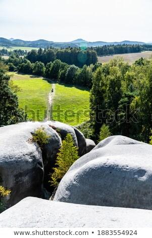 forest path near Skaly, Czech Republic Stock photo © phbcz