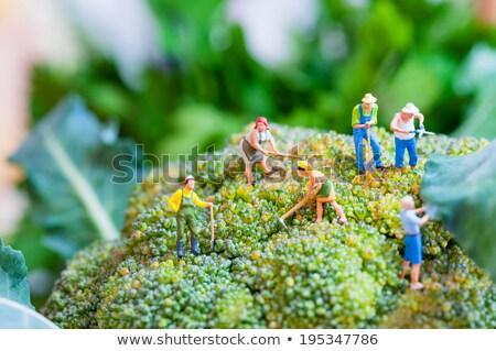 Group of farmers on a giant cauliflower Stock photo © Kirill_M