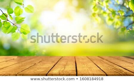 Voorjaar picknicktafel kers boom vliegen Stockfoto © tilo