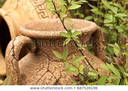 Antique Amphora in the garden Stock photo © manfredxy