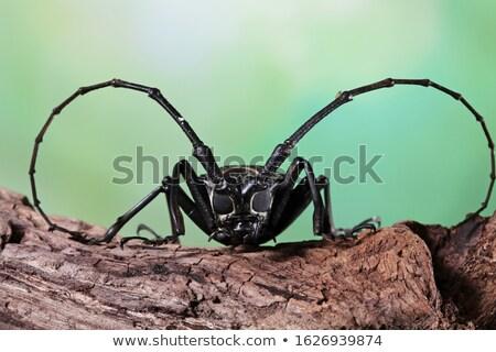 Makró barna bogár Stock fotó © manfredxy