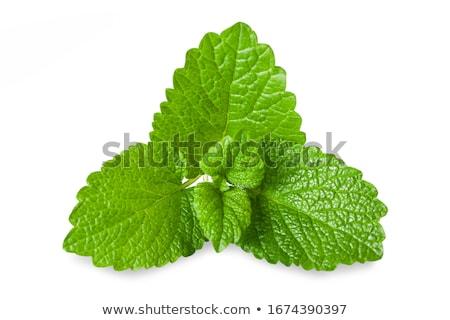 fresh lemon and a sprig of mint on natural background Stock photo © Yatsenko