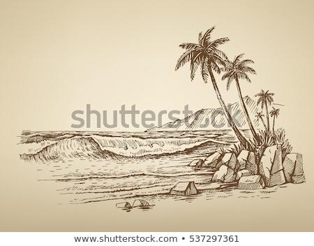praia · tropical · coco · palms · maca · tropical · paraíso - foto stock © robuart