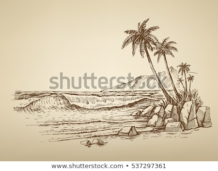 Foto stock: Beira-mar · praia · palms · maca · naturalismo