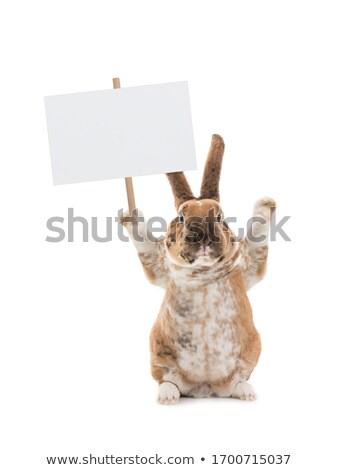 Cartoon кролик знак иллюстрация корзины Сток-фото © bennerdesign