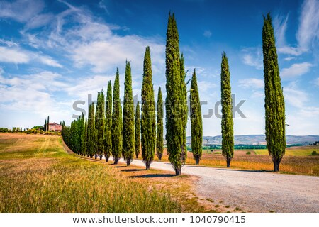 landscape of hills country road cypresses trees   italy stock photo © taiga