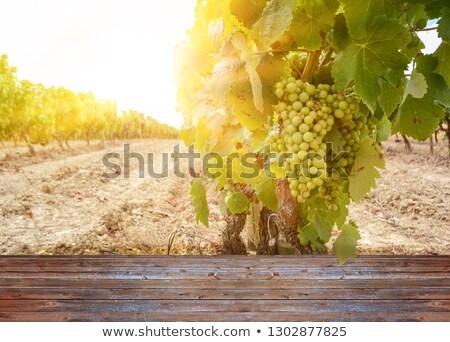 Vinho verde from Portugal Stock photo © inaquim