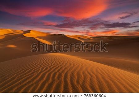 Sahara örnek çöl palmiye ağaçları ağaç doğa Stok fotoğraf © dayzeren