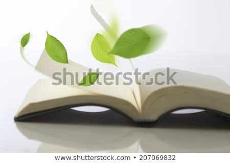girare · nuovo · foglia · libro · pagina · carta - foto d'archivio © unikpix