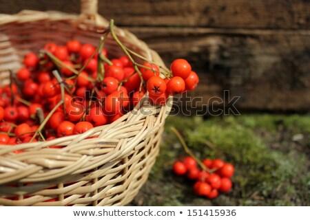 ripe bunches of rowan berries in a wicker basket stock photo © virgin