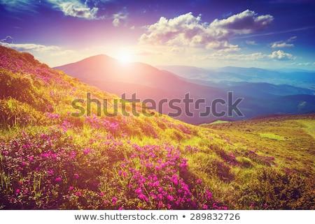 Grama maravilhoso manhã luz folhas árvore Foto stock © meinzahn