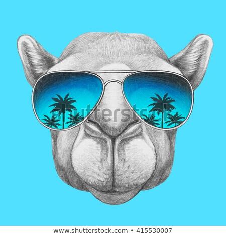 Napszemüveg teve illusztráció visel sivatag állat Stock fotó © lenm