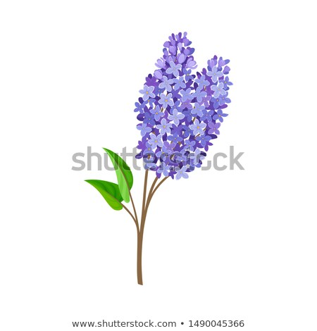 branch with lilac flowers Stock photo © mady70