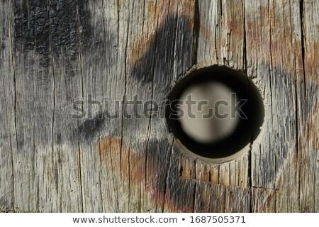 Viharvert fából készült pólus kőfal part virág Stock fotó © olandsfokus
