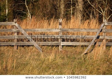 Podziale kolej ogrodzenia obraz drzewo Zdjęcia stock © njnightsky