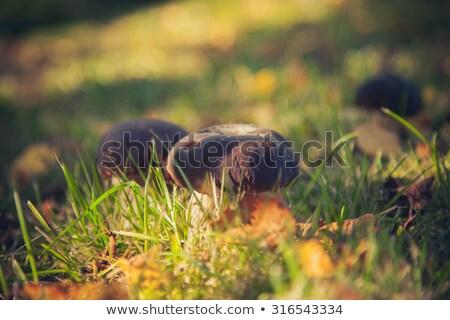 Beyaz yosun güneş büyük büyümek Stok fotoğraf © romvo