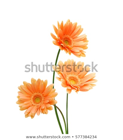 Stock photo: Three orange flowers