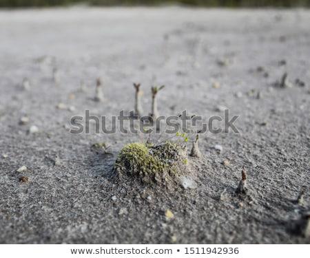 nierówny · plaży · Oregon · wybrzeża · wody · słońce - zdjęcia stock © davidgn