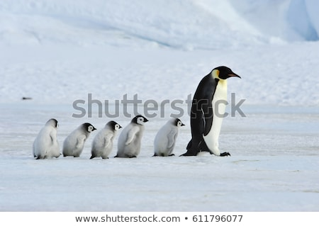 Antarctica with penguins and snow Stock photo © Panaceadoll