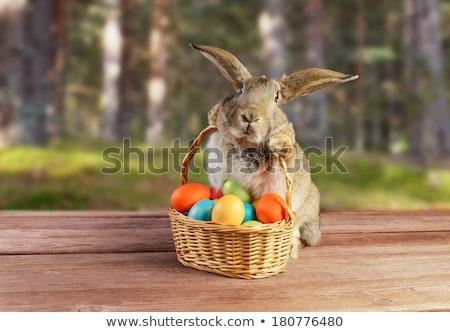 Conejo de Pascua huevos de Pascua madera naturaleza mesa escritorio Foto stock © Wetzkaz