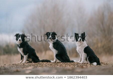 Foto stock: Tres · cute · monos · ilustración · fondo