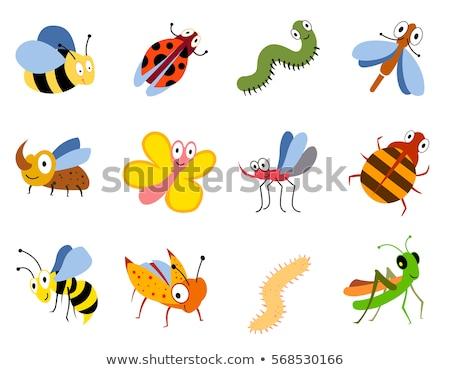 formiga · lagarta · desenho · animado · ilustração · insetos - foto stock © izakowski