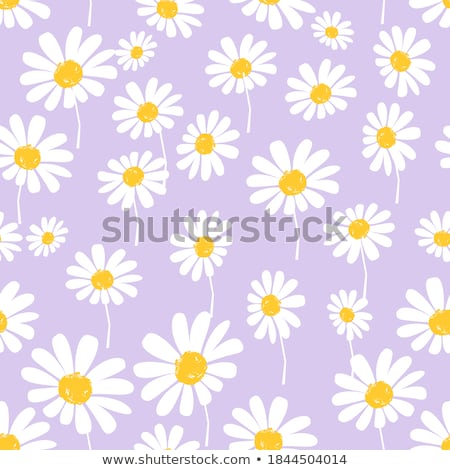 Purple daisy flower petals in bloom, abstract floral blossom art Stock photo © Anneleven