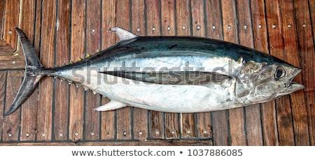 Atún frescos peces oscuro mar océano Foto stock © olira