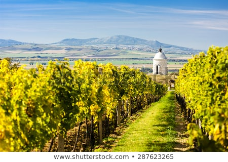 vineyards, Palava, Czech Republic Stock photo © phbcz