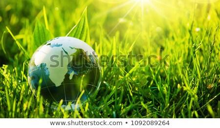 eco · groene · energie · wereld · continenten · kaart · blad - stockfoto © jezper